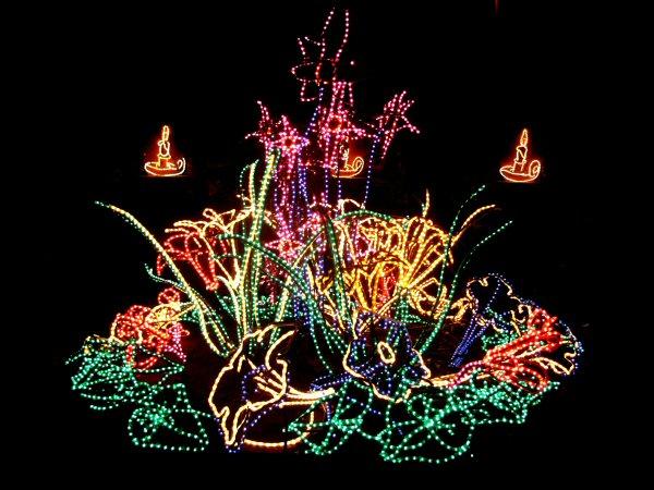 Christmas Lights Pics